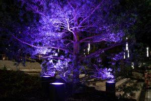 Lys på Budolfi plads efter mørke